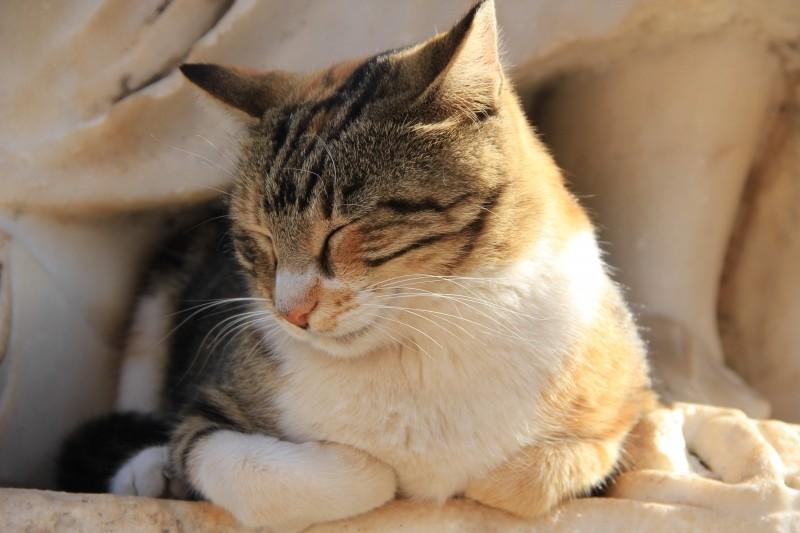 cat-sleep-hot-shadow-calm-kitten-rest-feline