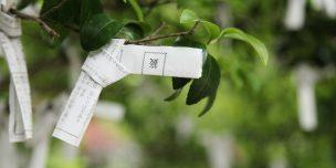 オーディションで使えるジンクスについて解説した記事中のイメージ画像です。木の枝にくくりつけられたおみくじがアップで写っています。