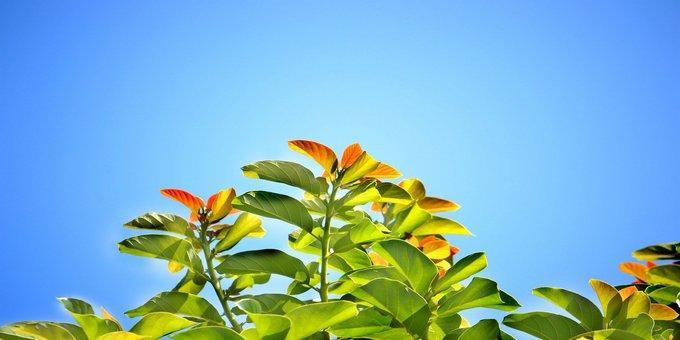 晴れた空に向かって鼻が咲いています。